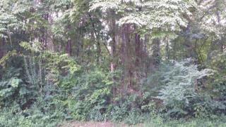 141 Depew Drive, Loudon TN