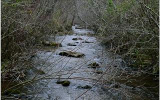 LOT 5 5 Pine Log, Warne NC