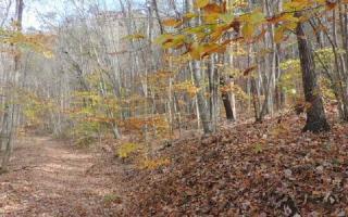 TR1 2 Red Fox Trail #47-48, Young Harris GA