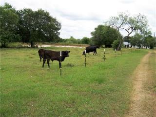 1797 Jeddo Road, Rosanky TX