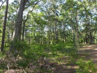 1771 Oak Estates Way, Edisto Island SC