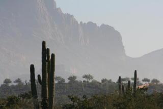 3564 South Ringtail Circle #42, Gold Canyon AZ