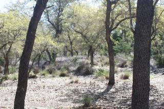 256 Goat Creek Cut Off Road, Kerrville TX