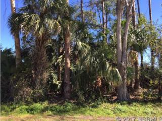 Umbrella Tree Drive, Edgewater FL