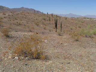 2121 West Dobbins Road, Phoenix AZ