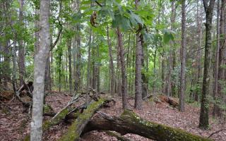1 Oak Morris Ridge, Jasper GA