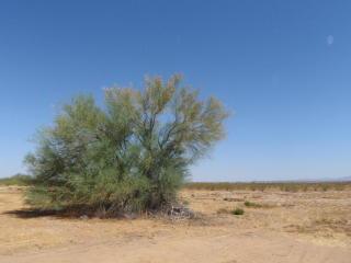 1962X West Soft Wind Drive Lot, Surprise AZ