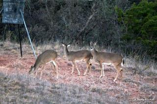 358 Southwind Road, Bridgeport TX