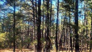 3010 Apache Cv, Lakeside, AZ 85929