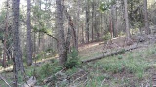 4 Sneaky Pete Ct, Cloudcroft, NM 88317