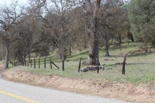 Hwy 155, Woody, CA 93287