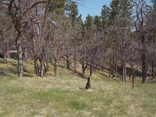 Tbd Bear Claw Trl, Sundance, WY 82729
