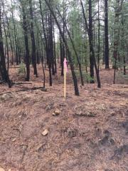 12.29 Acres Trumble Canyon, Mora NM