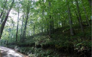Ralston Ridge, Suches GA