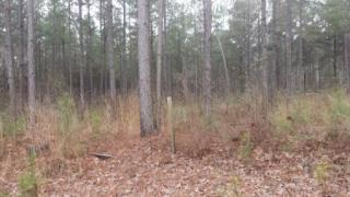 650 Bluff Springs Road, Gloster MS