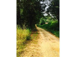 398 Moody Rd, Forest, MS 39074