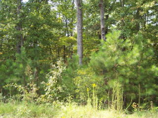 Lot 1A Ga Hwy 315, Cataula, GA 31804