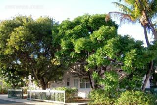 3709 South Olive Avenue, West Palm Beach FL
