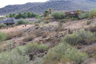 3323 West Carriage Drive, Phoenix AZ