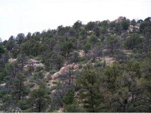 6700 Box Canyon Place, Prescott AZ
