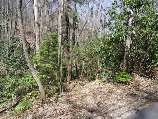27 Rhododendron Road, Black Mountain NC