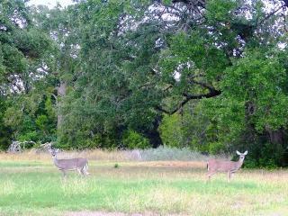 5 Crystal Creek Trl, Austin, TX 78737