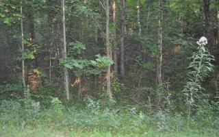 Lot 78 Campbell Cove, Copperhill TN