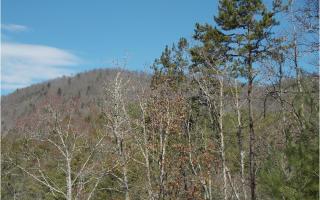 10 Rabbit Ridge Road, Suches GA