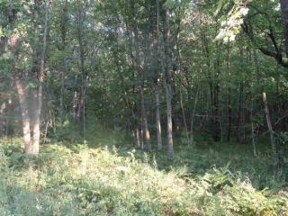 5 Acres Johnson Rd, Iola, WI 54945