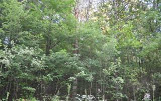 Lot 77 Campbell Cove, Copperhill TN