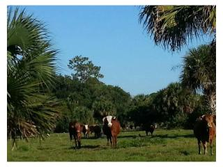 land only Lionel Road #land, Mims FL