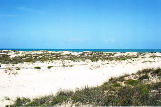 Tract 7 Other, South Padre Island TX