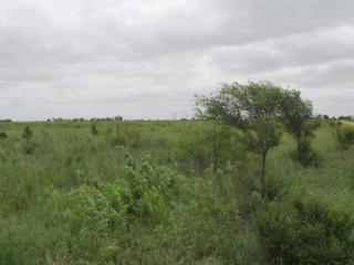 45 E County Road 7000, Lubbock, TX 79404
