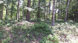 Coots Trail, Hampstead NC