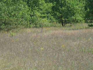 8 Timberwood Acres, Petoskey MI