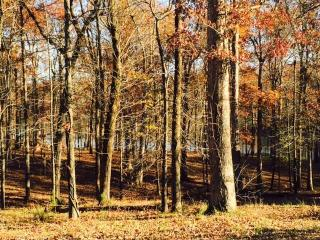 Lot 68 Bayview Drive, Grand Rivers KY