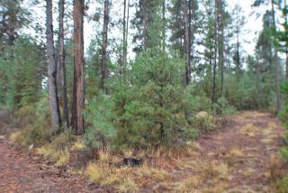 51639 Dorrance Meadow Road, La Pine OR