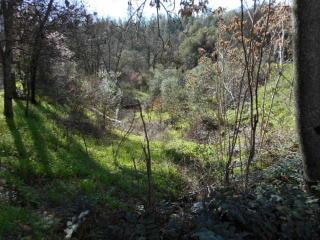 18542 Three Homes Road, Grass Valley CA
