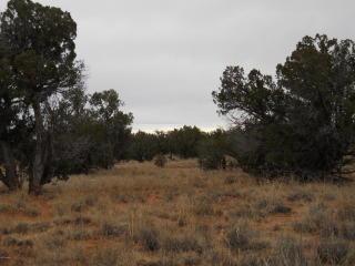 Southwest Corner 9125 9027, Concho AZ