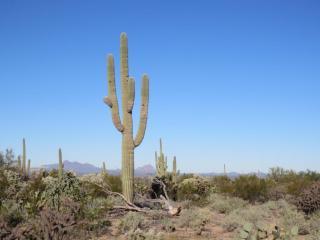 Rudasill, Tucson AZ