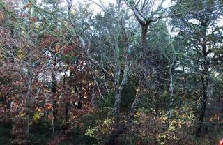Woodland Way, North Chatham MA