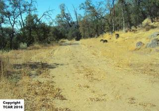 Chaparral, Sonora CA