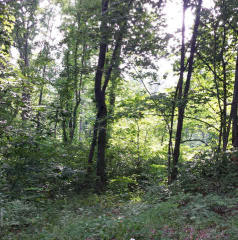 Roundhill Road, Mount Jackson VA