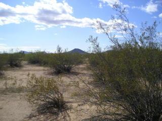Lot 4 West 523 Rd Avenue S, Aguila AZ