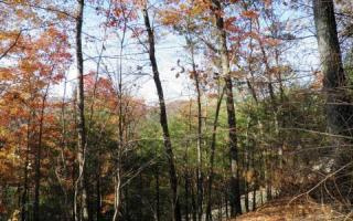 LOT18 Forest Has Eyes, Blue Ridge GA