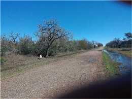 Cattle Guard, Terryville TX