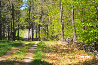 Spear Cemetery Road, Reading VT