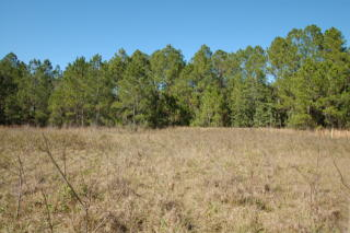 Lot 12 Greengrove Boulevard, Clermont FL