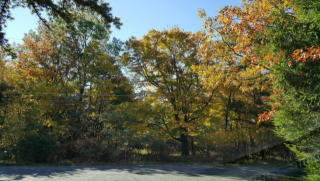 Parker Trail, Albrightsville PA