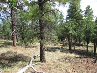 20225011A South Golden Meadows Trail, Williams AZ